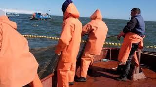 Более 320 тысяч тонн лосося | Новости сегодня | Происшествия | Масс Медиа