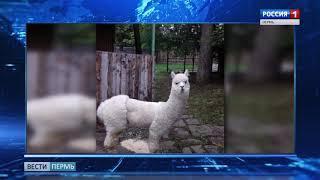 В Пермском зоопарке - новенькая