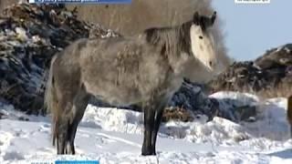 Жители Миндерлы жалуются на табун бесхозных лошадей