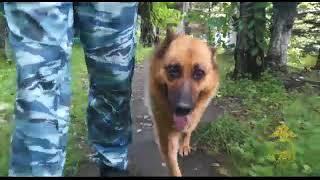 Четвероногая МВД помогла раскрыть кражу во Владивостоке