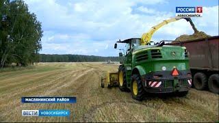 «Вести» побывали на полях хозяйства «Сибирская Нива»