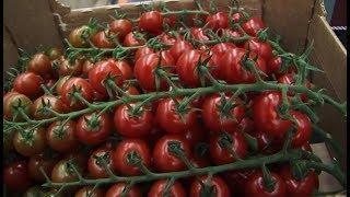 В югорских супермаркетах будут продавать крымские помидоры