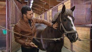 Лошади стали новыми друзьями журналиста ОТРК «Югра» Василия Сысуева