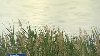 Последние теплые деньки: с понедельника на Дону начнется настоящая осень