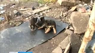 Анонс: 12 трупов бродячих собак обнаружили очевидцы возле Платинум-Арены