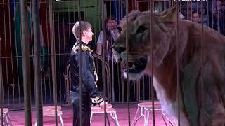 Уникальное шоу с 200-килограммовыми кошками представили в Самарском цирке