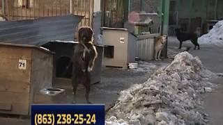 Ростовская хвостатая банда: что делать, если на вас напала собака