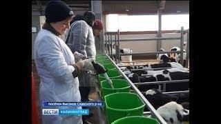 Первая в стране агрошкола открылась в посёлке Высокое Славского района