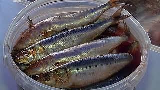 Свежая рыба, лечебный мед и саженцы от сибирских агрономов