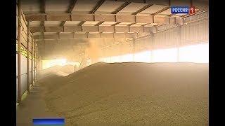 Хлебный вопрос: почему не выгодно выращивать высококлассное зерно
