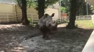 Посетители Ростовского зоопарка теперь могут увидеть носорога Зеона