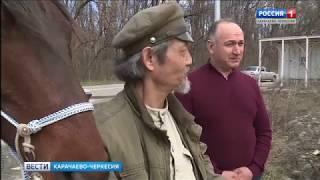 Из Усть-Джегуты до Мурманска на лошади карачаевской породы