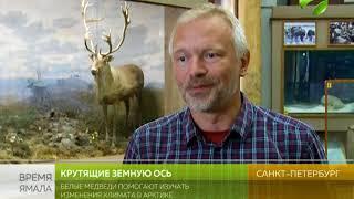 Белые медведи помогают изучать изменения климата в Арктике