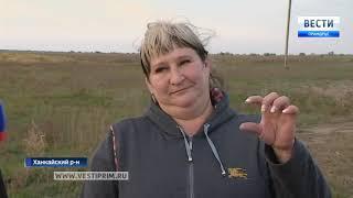 Государственный грант помог семейному подсобному хозяйству в Приморье расшириться до размеров фермы
