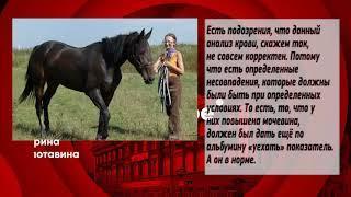 Гибель лошадей: столичные ветеринары не верят саратовским