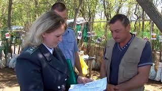 Россельхознадзор: документы нужно проверять и у деревьев