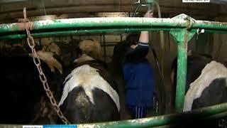 В Ужурском районе объявлен карантин из-за бешенства животных