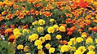 В Когалыме гидропосев помогает сберечь цветы