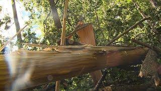 В Саранске устраняют последствия урагана