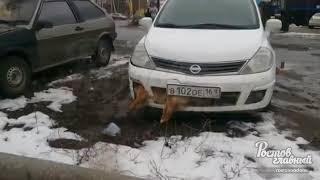 Машина с собакой 26.2.2018 Ростов-на-Дону Главный