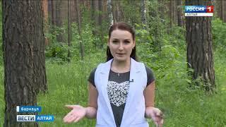 Жители Алтайского края жалуются на нашествие комаров и мошек