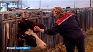 На помощь башкирским аграриям выделят 560 млн рублей из регионального бюджета