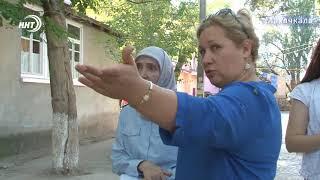 Опасная амброзия в Махачкале разрастается