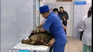 Кладбище домашних животных: проблема или блажь их хозяев?