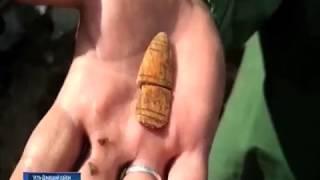 В Усть-Донецком районе археологи нашли уникальный амулет