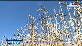 Пензенские аграрии приступили к уборке яровых