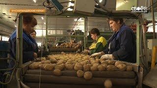 Яблоки, лишённые кислорода: ставропольские аграрии приступили к уборке фруктов и овощей