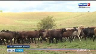В Пензенской области возрождается овцеводство