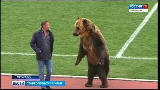 День сурка для русского медведя