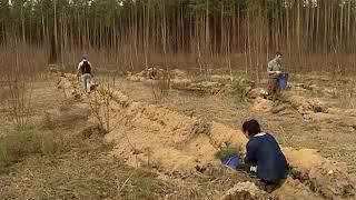 Ярославцы могут подарить молодоженам лес