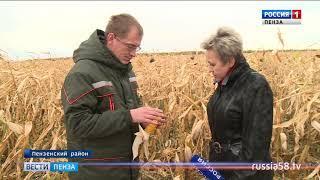 Пензенские аграрии намолотили более 25,5 тыс. тонн кукурузы