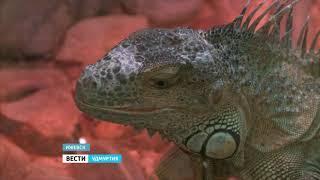 Зоопарк Удмуртии набирает волонтеров