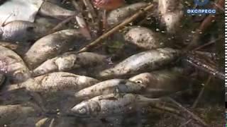 На пруду возле горбольницы №6 снова гибнет рыба
