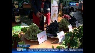«Донская лоза» првилекает все больше туристов из других регионов России