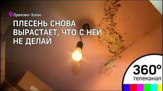 В Орехово-Зуеве многодетная мать восемь лет пытается избавить квартиру от плесени