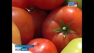 В тепличных хозяйствах Адыгеи приступили к первому массовому сбору урожая
