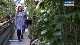 Субтропические растения Новосибирского ботсада перенесут в новую оранжерею