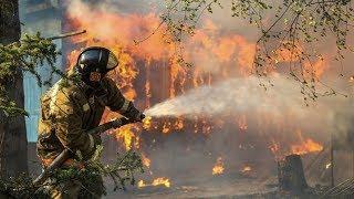 Стала известна главная причина лесных пожаров в Югре