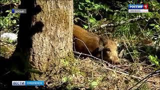 Диких смоленских животных пересчитали охотоведы и зоологи