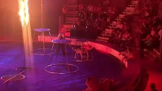 У тигра случился припадок во время выступления в магнитогорском цирке