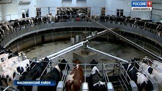 Строительство крупного животноводческого комплекса завершают в Маслянинском районе