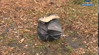 В Пензенской области займутся уборкой мусора в лесу