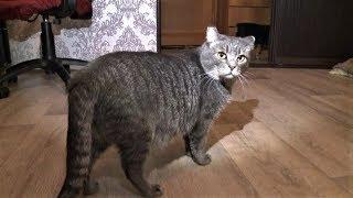 Легко ли быть волонтёром: 300 кошек побывало дома у жительницы Нефтеюганска