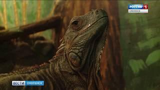 В смоленском зоопарке выберут самое красивое животное