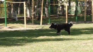 Замглавы Ковылкинского района заплатит судебный штраф за бродячих собак