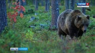 Медведи в Карелии пошли в люди
